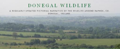 donegal wildlife